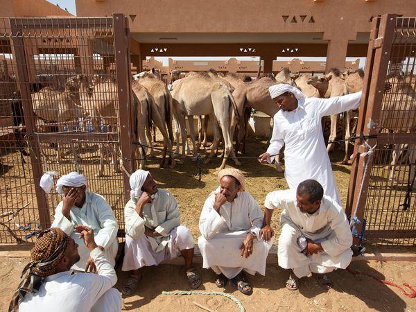 Рынок верблюдов накануне Ид Аль Адха