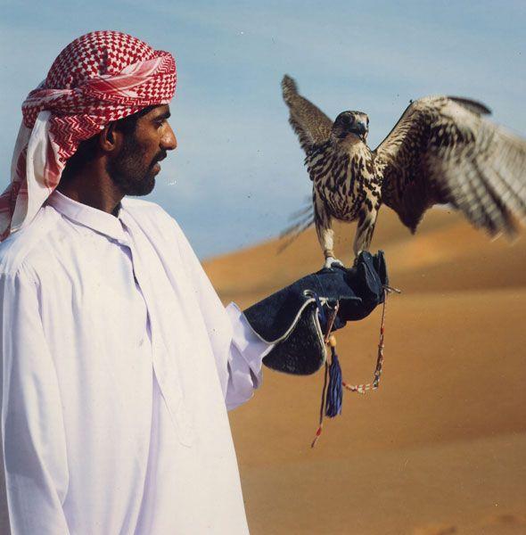 Соколиная охота в ОАЭ