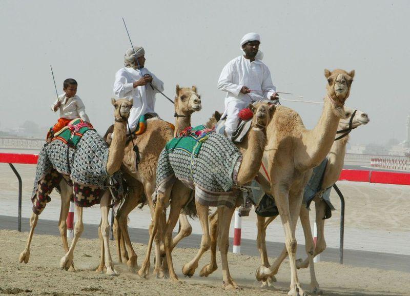 Верблюжьи скачки