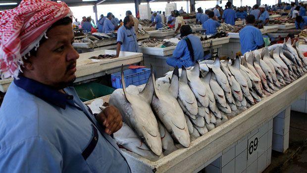 Рыбный рынок в ОАЭ
