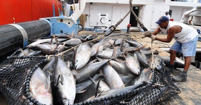 Рыбалка в ОАЭ - тунец
